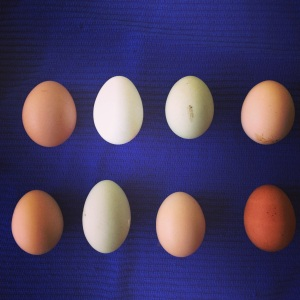 More beautiful farm fresh eggs!