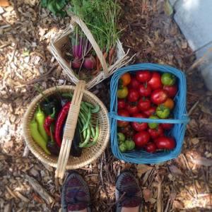 Garden harvest!